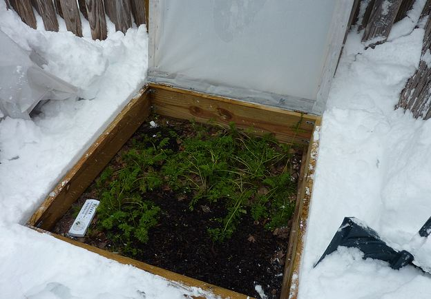 Cold frame snow
