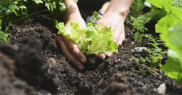 Five simple ways to improve soil quality for successful for Soil quality definition