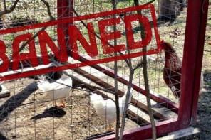 Backyard Farming Illegal
