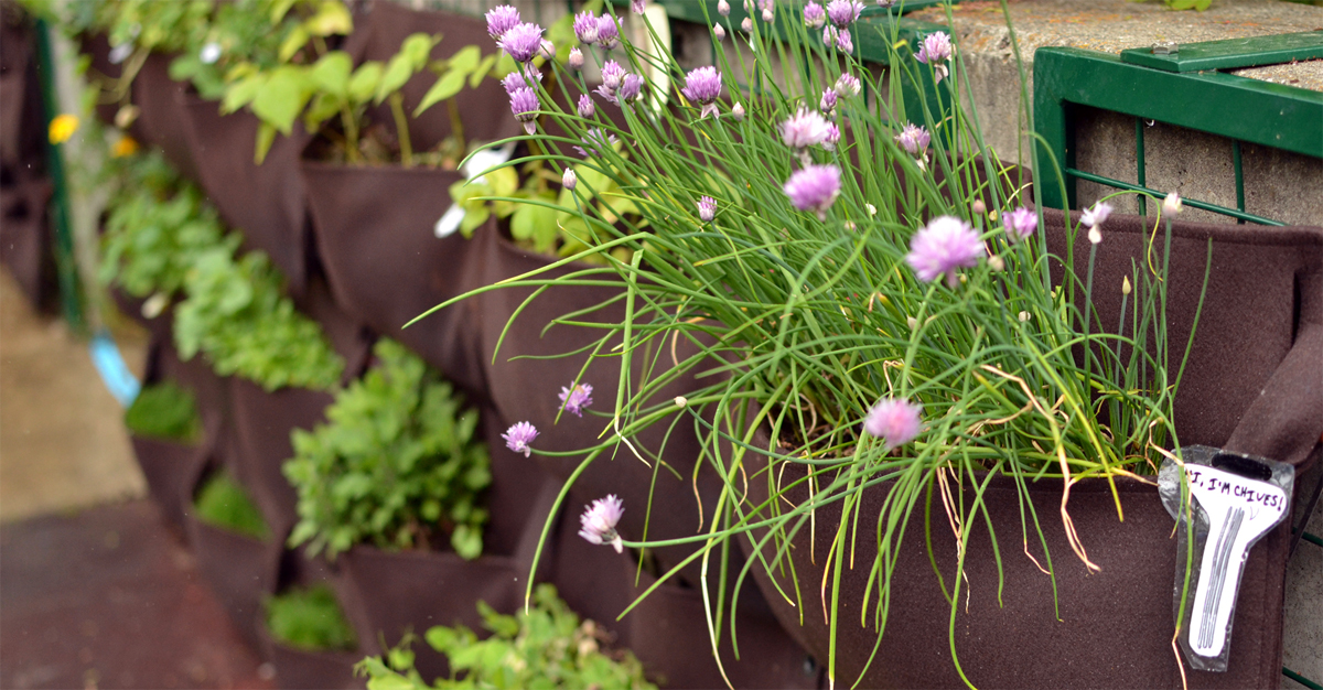 Woolly Pocket Vertical Garden Planter Review