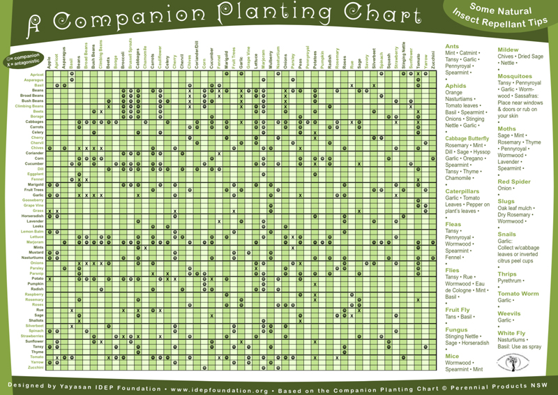 The ultimate companion planting guide chart - Companion planting ...