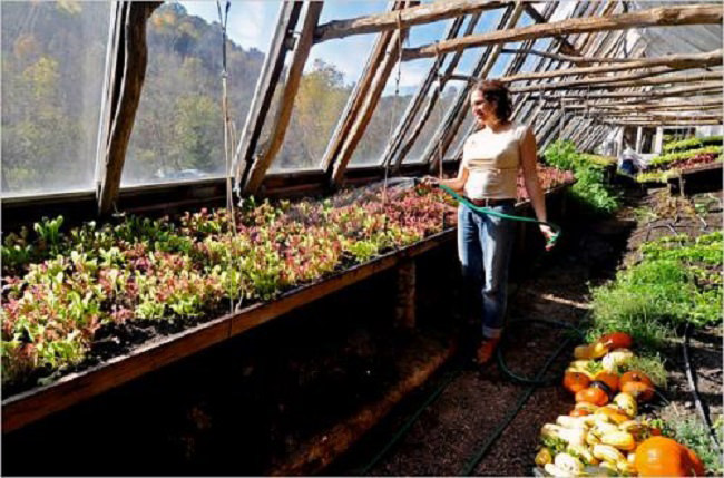 Inside the Driftless Farm Greenhouse