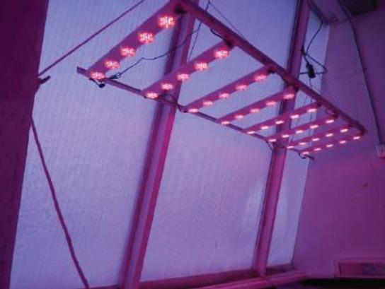 Growmaster LEDs