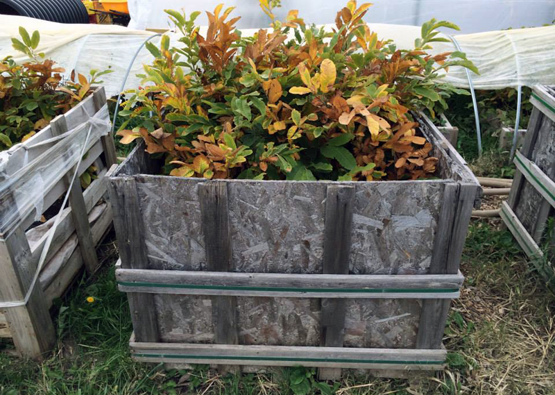 Grant Schultz 's palletized chestnut nursery box