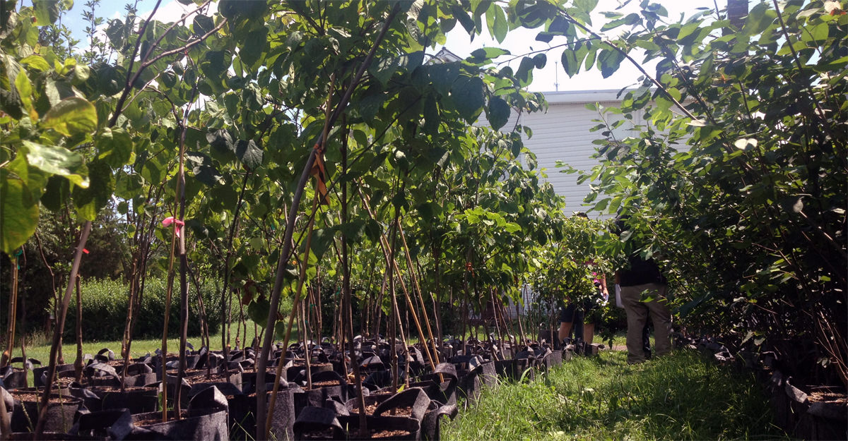 How to Start a Small Permaculture Tree Nursery