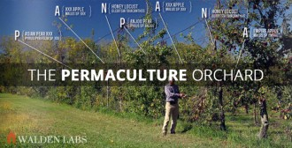 The Permaculture Orchard