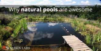 DIY natural pool