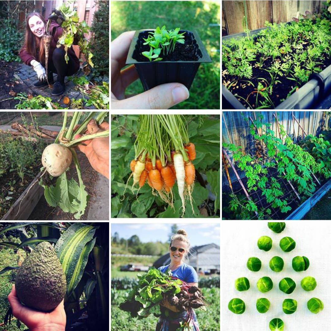 Urban Gardeners Republic on Instagram