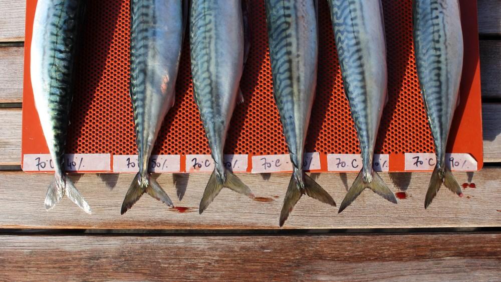 Cold-smoked mackerel