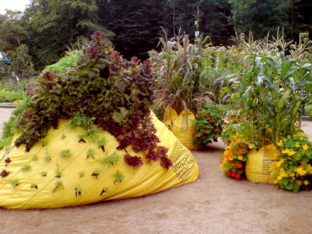 What the Heck are Bag Gardens?