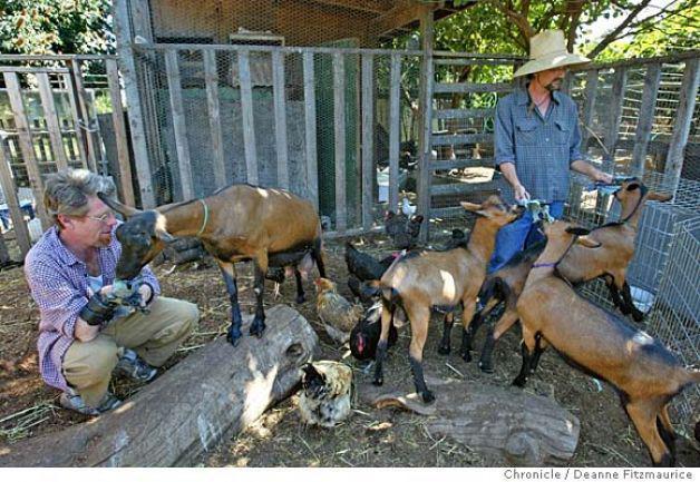Backyard Livestock Illegal