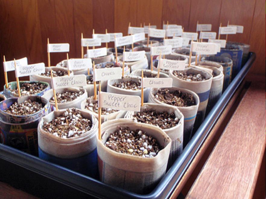 indoorplants2