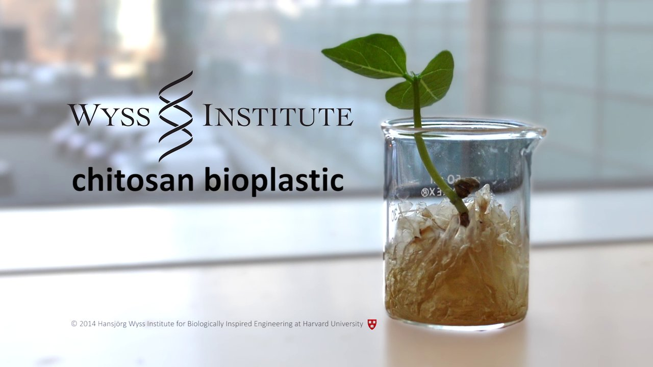 A New Take on Biodegradable Plastic