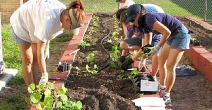 Is Your Urban Garden Safe?