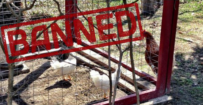 Many Backyard Farmers Just Lost Their Right to Farm Their Own Land