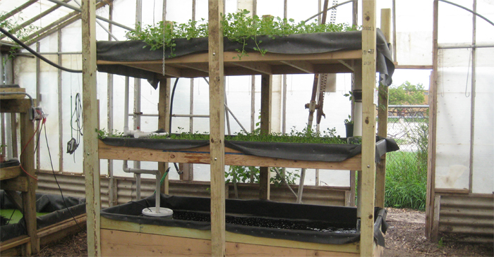 One Way to Make Aquaponics Easier
