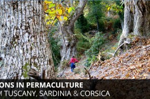 Timeless Lessons in Permaculture & Tree Crops From Tuscany, Sardinia & Corsica
