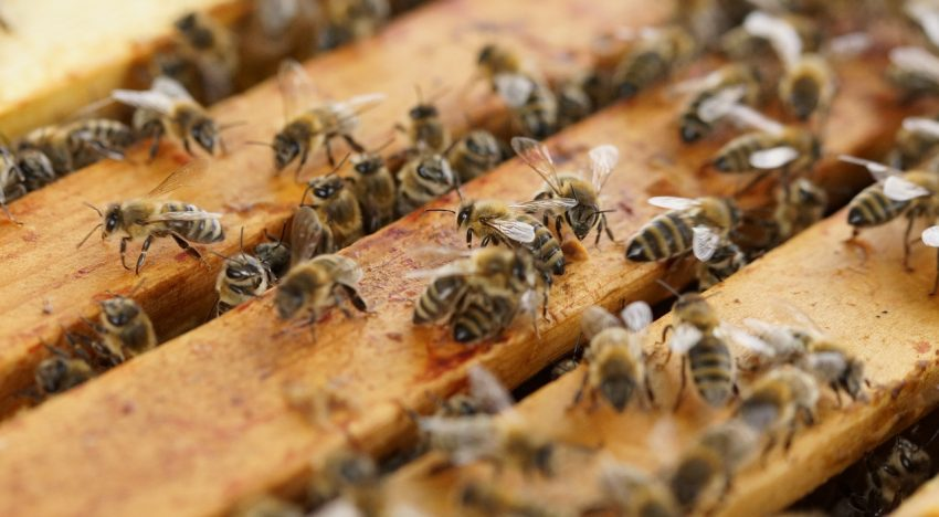 The Bee Hive – An Anarchistic Monarchy?