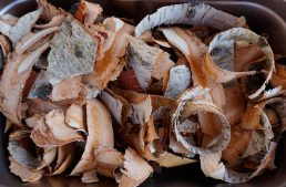 Using Tree Bark Flours in Cooking